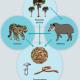 La basura y el ciclo de los materiales. Ciencia en el aula.